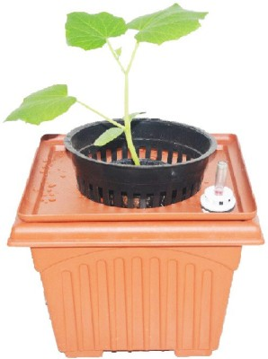 GZ Green Hydroponic medium Cucumber kit with Water level indicator Plant Container