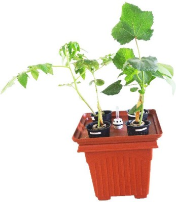 GZ Green Hydroponic combo planter with water indicator Plant Container