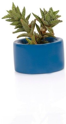 The Jade Garden Plant Container