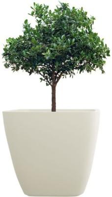 yuccabe italia asa Plant Container