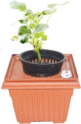 GZ Green Hydroponic strawberry Alpine fruit kit with water level indicator ( Easy to grow ) Plant Container