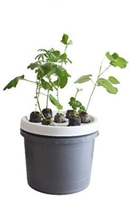 GZ green Aeroponic 7 plant System With water sprinkler Plant Container