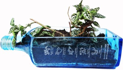 Kavi The Poetry Art Project Plant Container