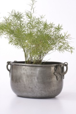 Goyal India Plant Container
