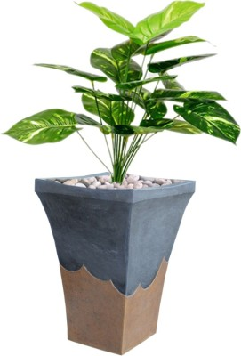 Greymode Black Alai Plant Container