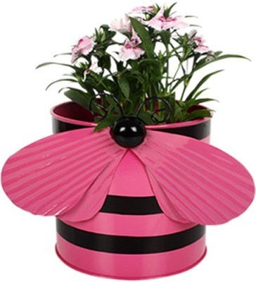 TrustBasket Bee Planter Plant Container