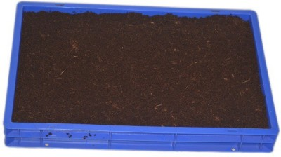 GZ Green Hydroponic Wheatgrass Growing plant Heavy kit using Cocopeat Plant Container