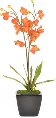 @home flower arrangement Plant Container