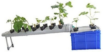GZ Green Plant Container