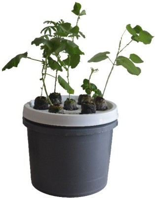 GZ Green Aeroponic 7 plant system kit Plant Container