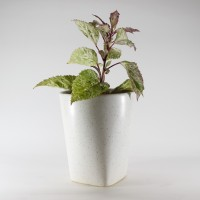 PORT REGALO Plant Container(Ceramic, External Height - 10 cm)