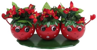 Wonderland Smily Tomato Face Pot Plant Container
