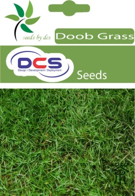 DCS Doob Grass (packet of 1g) Seed