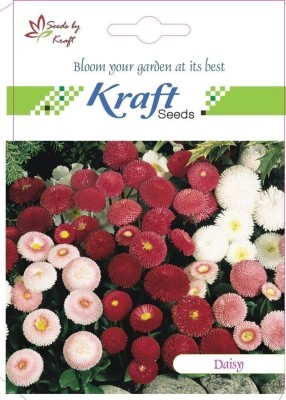 Kraft Seeds Daisy Pomponette Mix Flower Seeds (Pack Of 2) Seed