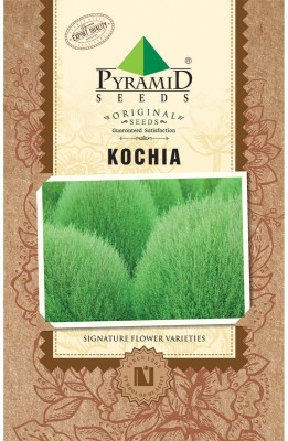PYRAMID SEEDS Kochia Fire Seed