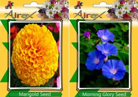 Airex Marigold and Morning Glory Flower Seed (pack of 15 seeds per packet) Seed(15 per packet)