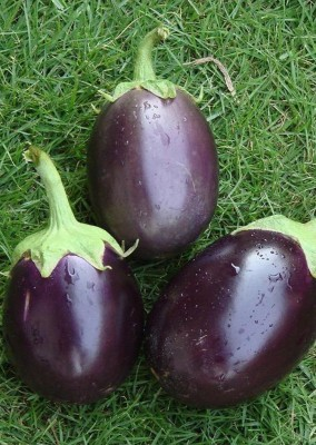 Real Seed Brinjal Research F1 Hybrid Imported Seed