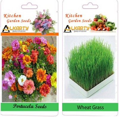 Alkarty Portulaca and Wheat Grass (Summer) Seed