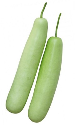 Real Seed Bottle Gourd F1 Hybrid Imported Seed