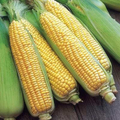 Biocarve Sweet Corn Seed