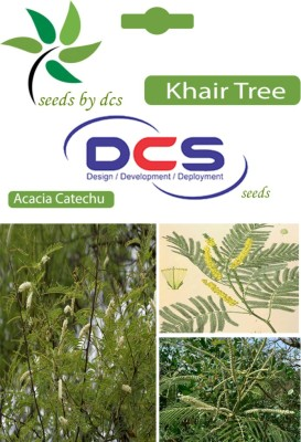 DCS Khair Forest Plant (25 Seeds Per Packet) Seed
