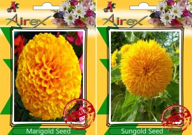 Airex Marigold and Sungold Flower (Summer) Seed (pack of 20 seeds per packet) Seed(20 per packet)