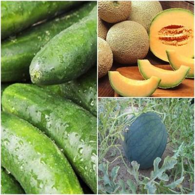 Biocarve Summer Vegetable Kit Pack of 3 Seed