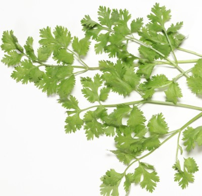 Indous Agriseeds Indo Us 333 Coriander Seeds Seed
