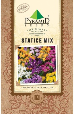 PYRAMID SEEDS Statice Mix Seed