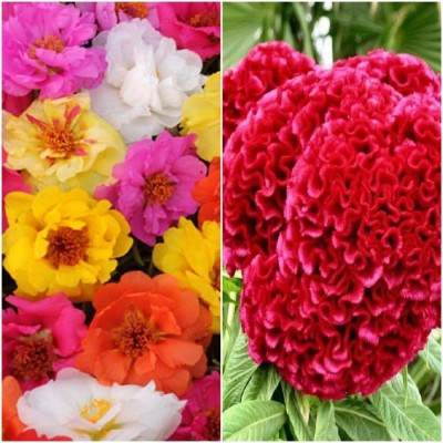 Biocarve Summer Flower Kit For Small Gardens Pack Of 2 Seed