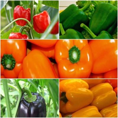 Biocarve Capsicum Vegetable Kit Seed