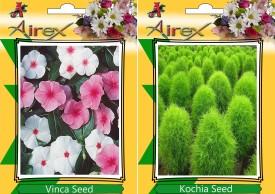Airex Vinca and Kochia (Summer) Flower Seeds (pack of 25 seed per packet) Seed(25 per packet)