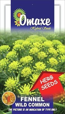Omaxe FENNEL WILD FLOWER TYPE 2GM.50+ SEEDS BY OMAXE Seed