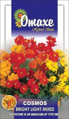 Omaxe COSMOS BRIGHT LIGHT MIXED SUMMER FLOWER SEEDS-AVG 50+ SEEDS BY OMAXE Seed