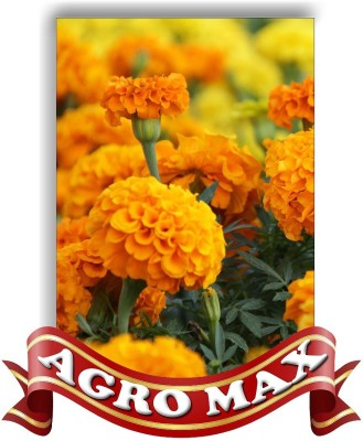 Agro Max MARIGOLD DOUBLE MIX Seed