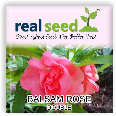 Real Seed Balsam Rose Double Mixed Flower Seed