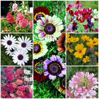 Biocarve Tall Borders Flower Kit Seed