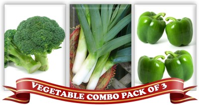 Real Seed Vegetable Combo Pack - Broccoli Green, Leek, Green Capsicum F1 Hybrid Imported Seed