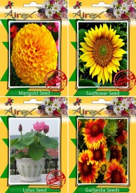 Airex Marigold,Sunflower,Lotus and Gaillardia Flower Seed (pack of 20 seeds per packet) Seed(20 per packet)