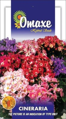 Omaxe CINENARIA MIXED WINTER FLOWER 50 SEEDS PACK BY OMAXE Seed