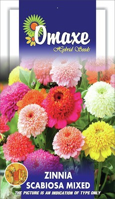 Omaxe ZINNIA SCABIOSA MIXED SUMMER FLOWER SEEDS-AVG 40/50+ SEEDS BY OMAXE Seed