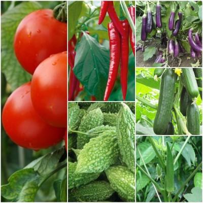 Biocarve Summer Vegetable Kit Pack of 6 Seed