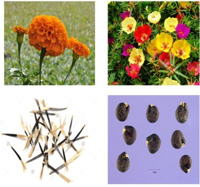Alkarty marigold and portulaca seeds Seed