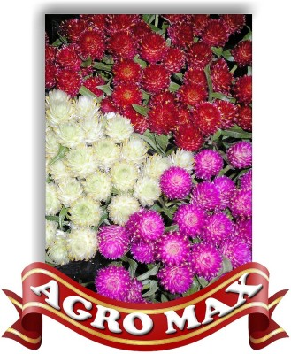 Agro Max GOMPHERENA MIXED Seed