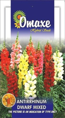 Omaxe ANTIRRHINUM DWARF MIXED WINTER FLOWER 50 SEEDS PACK BY OMAXE Seed