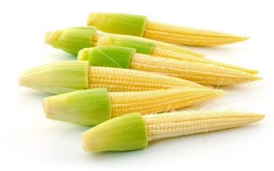 E-Plant Baby corn seeds Seed