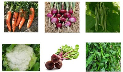 VGreen VGO221 - Organic Seeds Seed