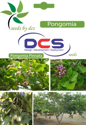 DCS Pongomia forest Plant (Per Pack 10 Seeds) Seed