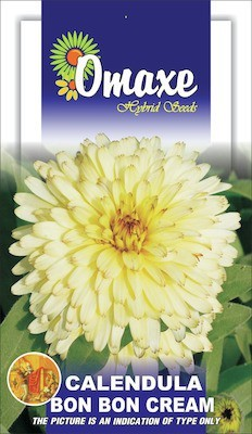 Omaxe CALENDULA CREAM WINTER FLOWER 50 SEEDS PACK BY OMAXE Seed