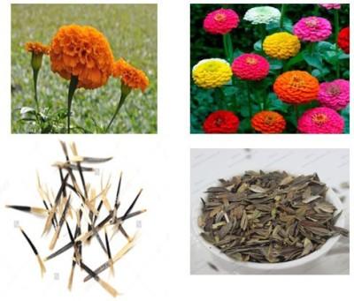 Alkarty marigold and zinnia seed Seed